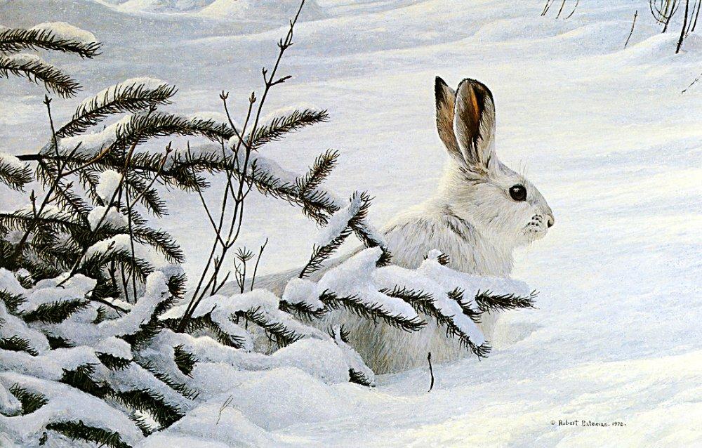 Охота на зайцев 02